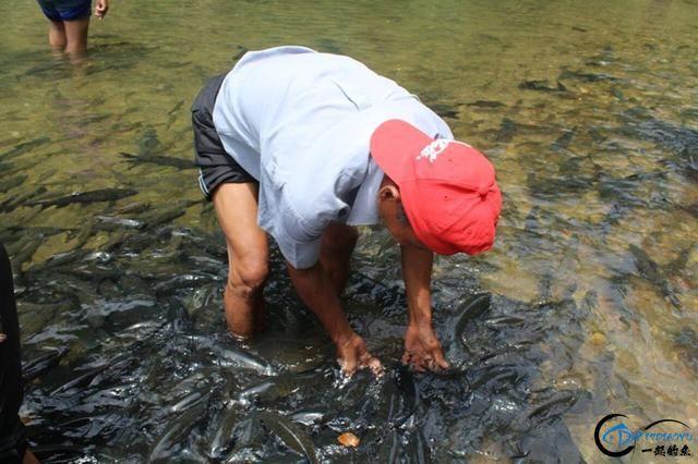 国外的鱼为啥就这么傻?竟然都不怕人,还给人做免费的鱼SPA-20.jpg