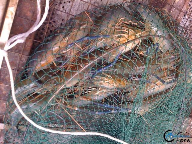 中国钓友湄公河狠狠的教训了一下湄公河泛滥的罗氏虾,真过瘾-9.jpg