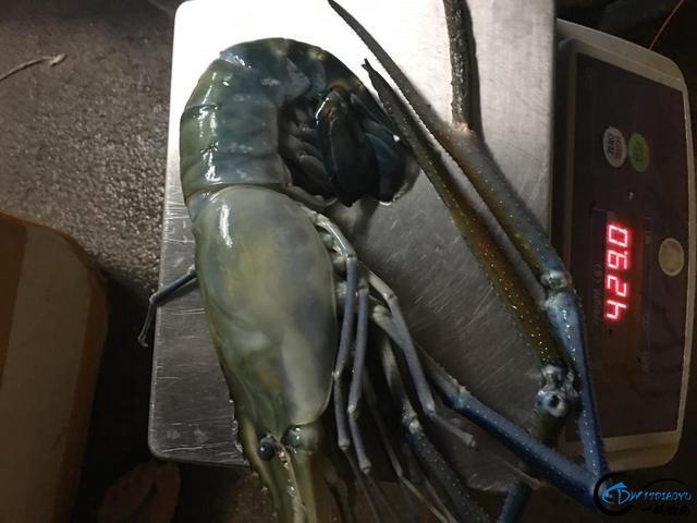中国钓友湄公河狠狠的教训了一下湄公河泛滥的罗氏虾,真过瘾-23.jpg