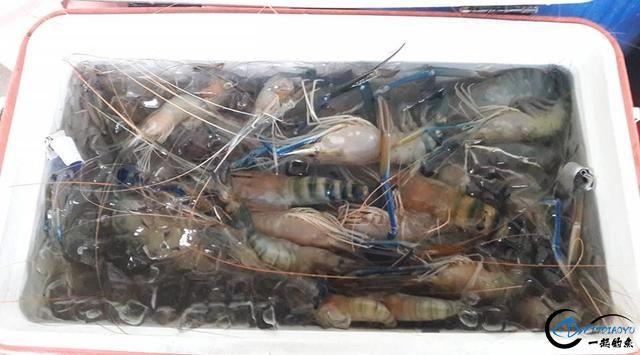 中国钓友湄公河狠狠的教训了一下湄公河泛滥的罗氏虾,真过瘾-14.jpg
