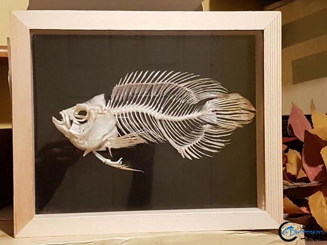 若是你能从这些鱼骨中喊出鱼的名字,那你一定就是大神中大神-4.jpg