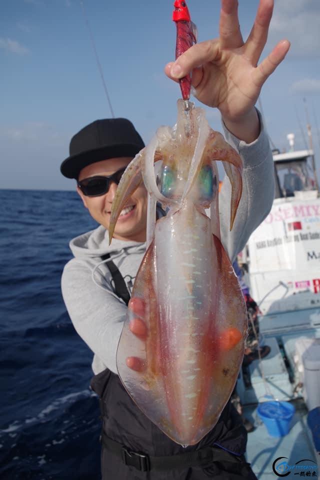 又一波年轻人中了海钓的毒,疯狂海钓鱿鱼和乌贼,渔获太牛了-8.jpg