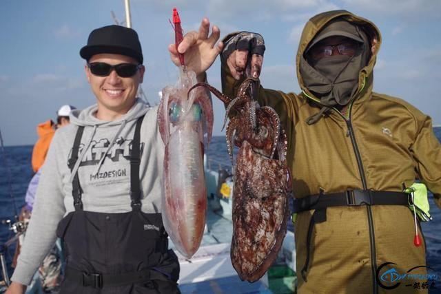 又一波年轻人中了海钓的毒,疯狂海钓鱿鱼和乌贼,渔获太牛了-24.jpg