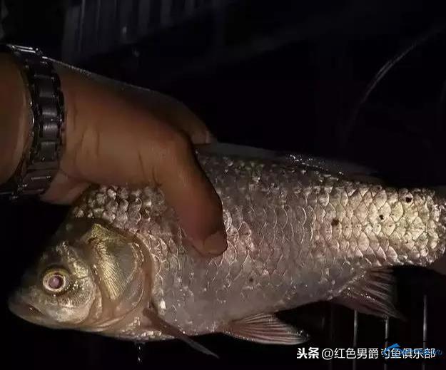 夜钓电子漂和蓝光钓鱼灯哪个聚鱼?这个问题到底骗了多少钓鱼人?-1.jpg