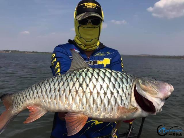 泰国秋兰湖真的是钓鱼人的天堂,鱼多的只能用泛滥来形容了-4.jpg