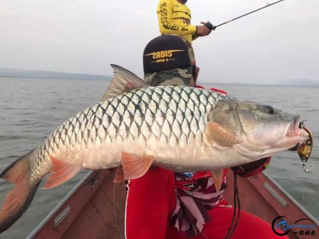 泰国秋兰湖真的是钓鱼人的天堂,鱼多的只能用泛滥来形容了-3.jpg