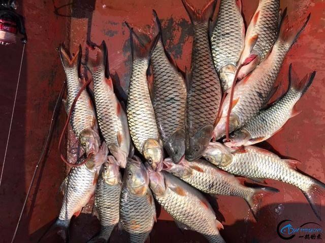 泰国秋兰湖真的是钓鱼人的天堂,鱼多的只能用泛滥来形容了-19.jpg