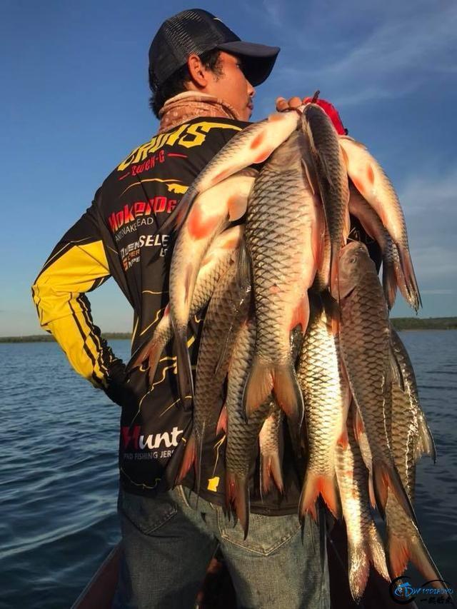 泰国秋兰湖真的是钓鱼人的天堂,鱼多的只能用泛滥来形容了-6.jpg