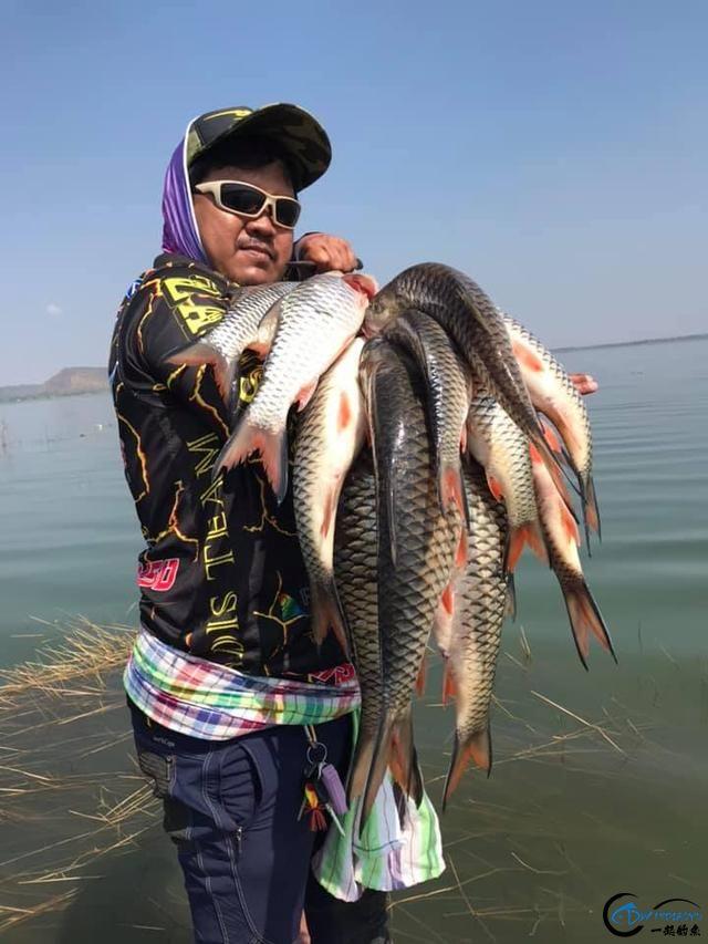 泰国秋兰湖真的是钓鱼人的天堂,鱼多的只能用泛滥来形容了-11.jpg