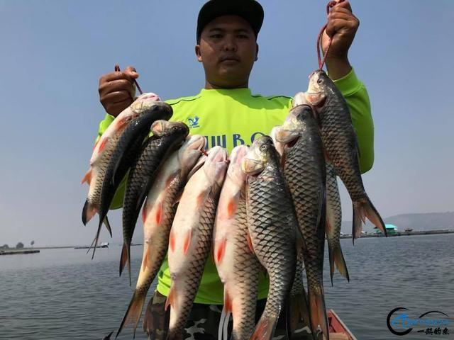 泰国秋兰湖真的是钓鱼人的天堂,鱼多的只能用泛滥来形容了-16.jpg