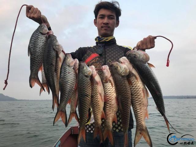 泰国秋兰湖真的是钓鱼人的天堂,鱼多的只能用泛滥来形容了-17.jpg