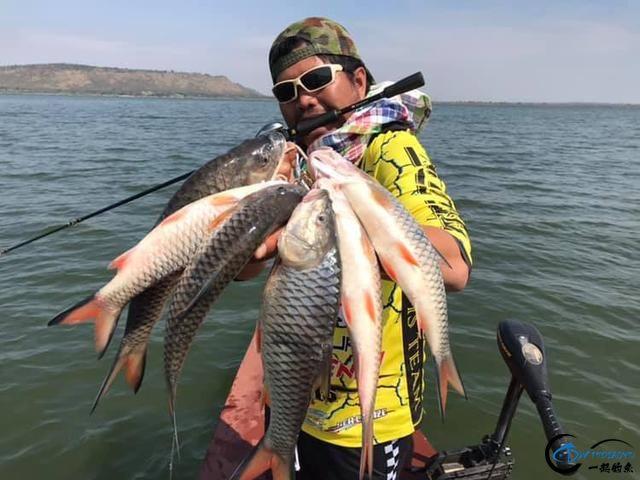 泰国秋兰湖真的是钓鱼人的天堂,鱼多的只能用泛滥来形容了-20.jpg
