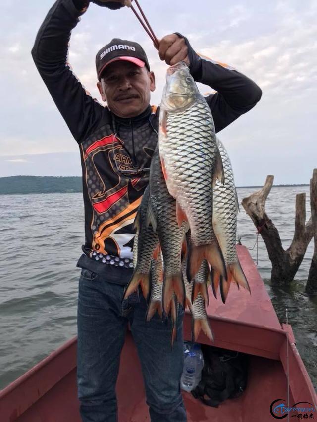 泰国秋兰湖真的是钓鱼人的天堂,鱼多的只能用泛滥来形容了-14.jpg