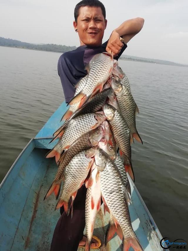 泰国秋兰湖真的是钓鱼人的天堂,鱼多的只能用泛滥来形容了-18.jpg