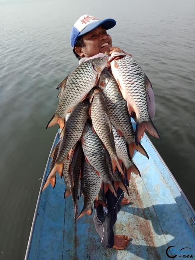 泰国秋兰湖真的是钓鱼人的天堂,鱼多的只能用泛滥来形容了-10.jpg