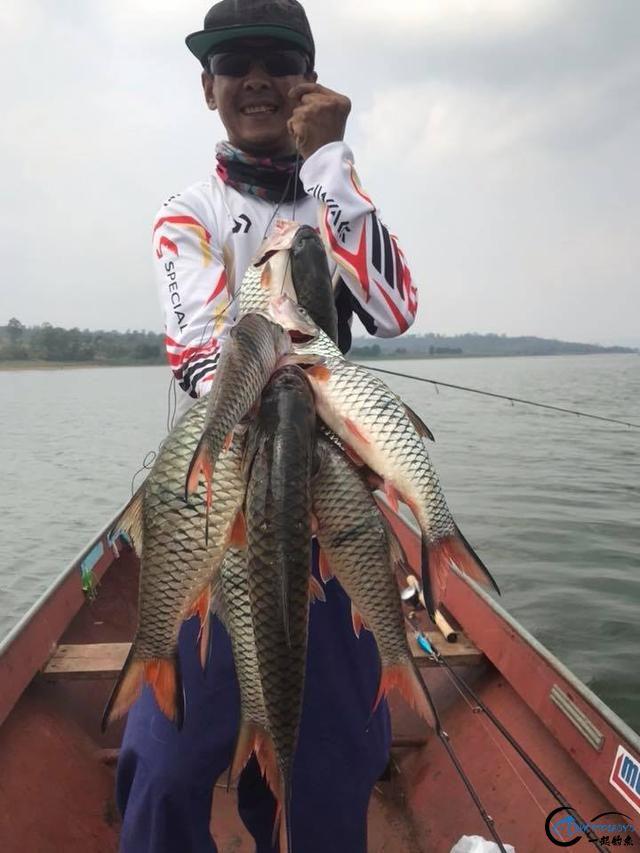 泰国秋兰湖真的是钓鱼人的天堂,鱼多的只能用泛滥来形容了-26.jpg