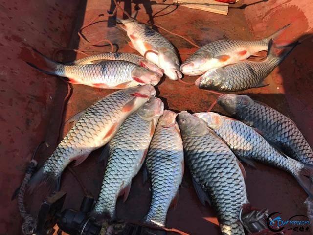 泰国秋兰湖真的是钓鱼人的天堂,鱼多的只能用泛滥来形容了-23.jpg