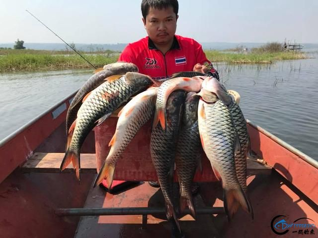 泰国秋兰湖真的是钓鱼人的天堂,鱼多的只能用泛滥来形容了-29.jpg