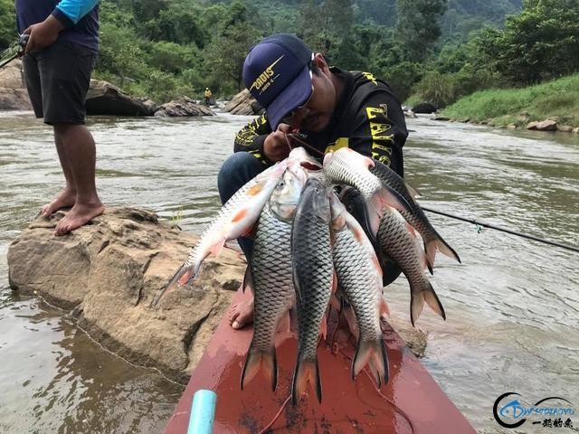 泰国秋兰湖真的是钓鱼人的天堂,鱼多的只能用泛滥来形容了-31.jpg