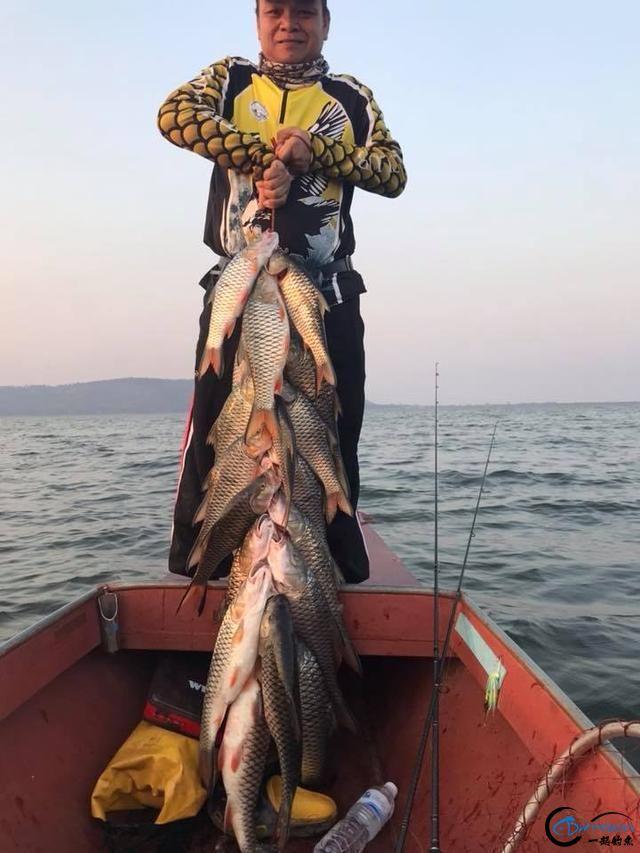 泰国秋兰湖真的是钓鱼人的天堂,鱼多的只能用泛滥来形容了-22.jpg