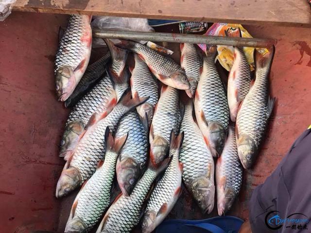 泰国秋兰湖真的是钓鱼人的天堂,鱼多的只能用泛滥来形容了-25.jpg
