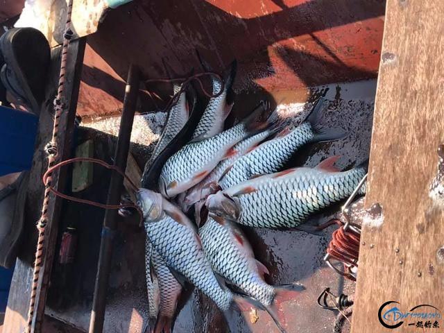 泰国秋兰湖真的是钓鱼人的天堂,鱼多的只能用泛滥来形容了-28.jpg