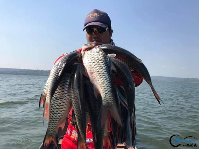 泰国秋兰湖真的是钓鱼人的天堂,鱼多的只能用泛滥来形容了-24.jpg