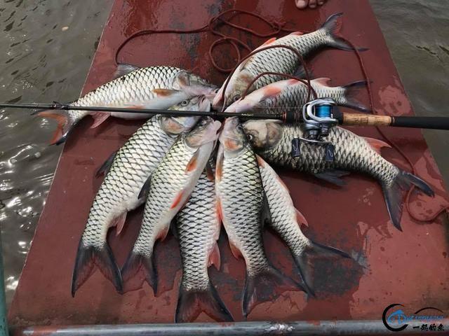 泰国秋兰湖真的是钓鱼人的天堂,鱼多的只能用泛滥来形容了-21.jpg