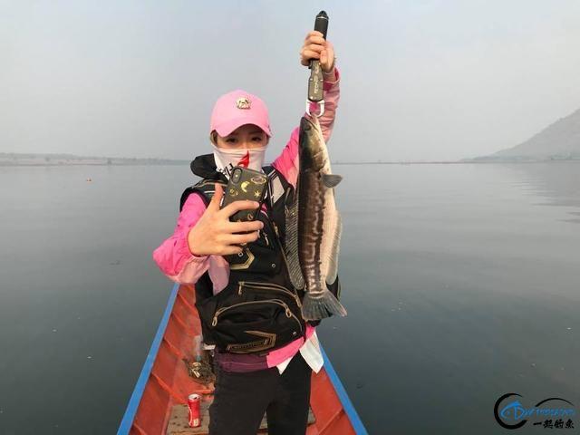 蛇头鱼又在北美泛滥成灾了,中国钓鱼人肩负着拯救美国的重任-1.jpg