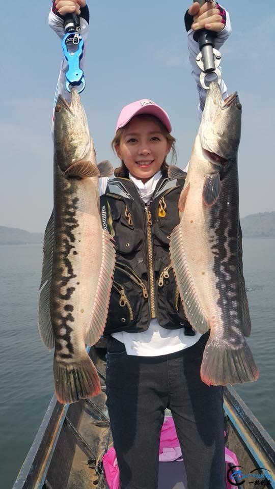蛇头鱼又在北美泛滥成灾了,中国钓鱼人肩负着拯救美国的重任-5.jpg