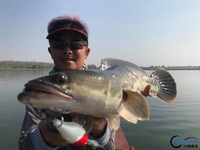 蛇头鱼又在北美泛滥成灾了,中国钓鱼人肩负着拯救美国的重任-29.jpg