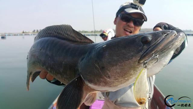 蛇头鱼又在北美泛滥成灾了,中国钓鱼人肩负着拯救美国的重任-30.jpg
