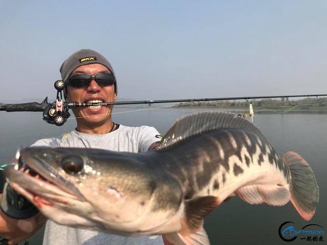 蛇头鱼又在北美泛滥成灾了,中国钓鱼人肩负着拯救美国的重任-31.jpg