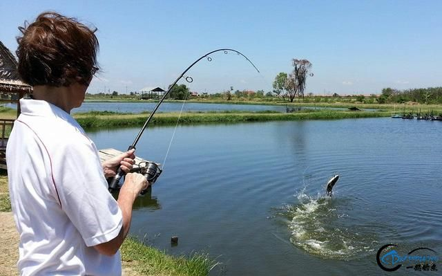 继亚洲鲤鱼之后,蛇头鱼又在美国泛滥成灾,好莱坞还拍了电影-13.jpg