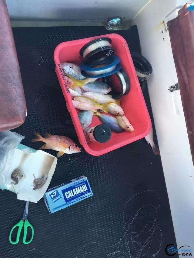 海钓的疯狂日|这里是上帝的水族馆!到了这里怎么能不体验下海钓-3.jpg