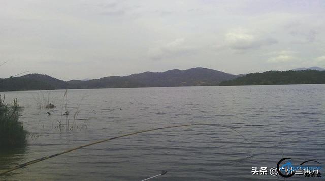 春季水库钓鲤鱼的三个秘诀,想多钓鱼的你看过来,建议收藏-3.jpg