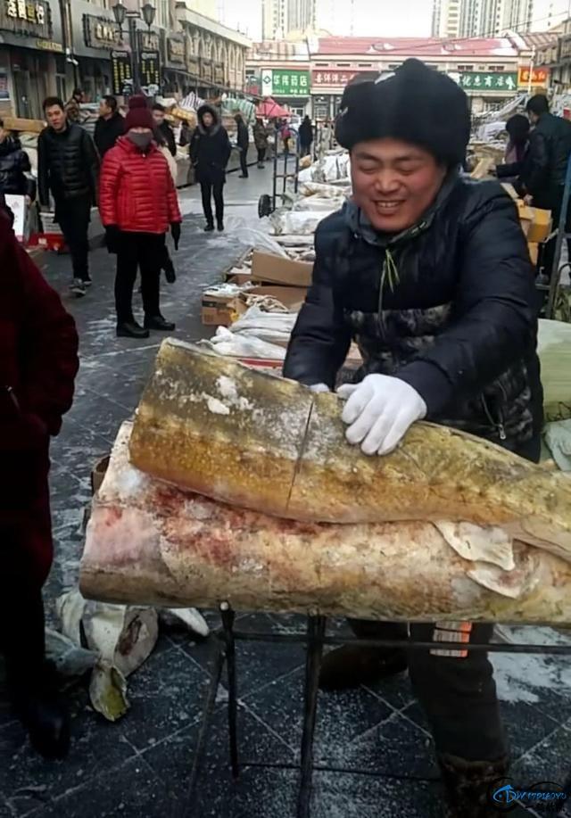 """能长到上千斤的""""淡水鱼王""""黑龙江大鳇鱼背后的故事-10.jpg"""