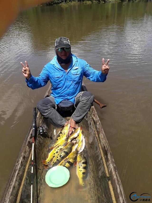 以美丽凶悍著称的孔雀鲈,遇见鱼饵拼命追,想钓点别的鱼都困难-17.jpg