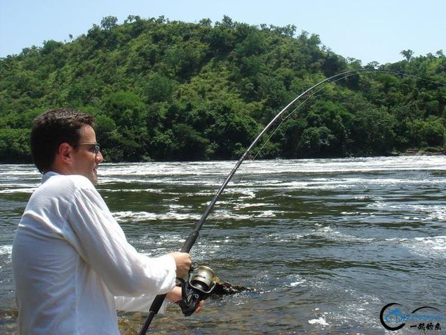 曾经是泛滥成灾的入侵鱼种,结果惨被吃成依靠政府保护的鱼种-11.jpg