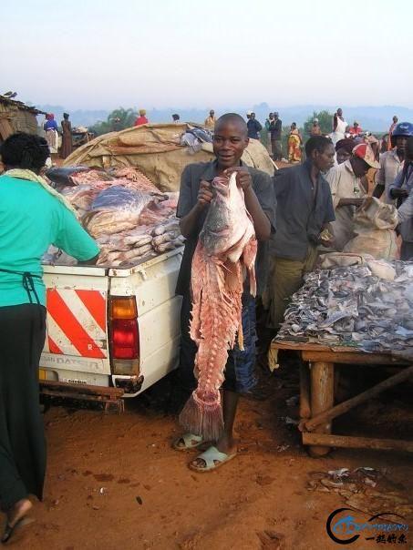 曾经是泛滥成灾的入侵鱼种,结果惨被吃成依靠政府保护的鱼种-5.jpg