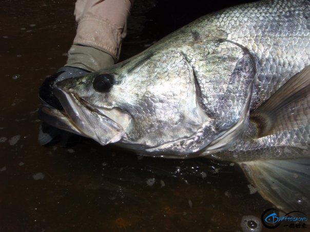 曾经是泛滥成灾的入侵鱼种,结果惨被吃成依靠政府保护的鱼种-13.jpg