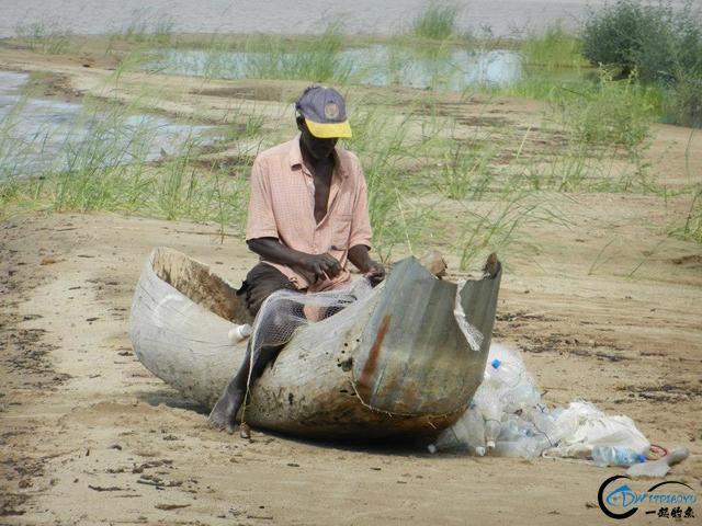 曾经是泛滥成灾的入侵鱼种,结果惨被吃成依靠政府保护的鱼种-3.jpg
