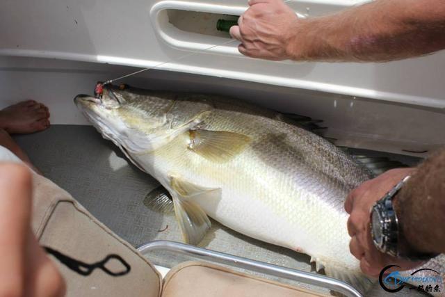 曾经是泛滥成灾的入侵鱼种,结果惨被吃成依靠政府保护的鱼种-28.jpg