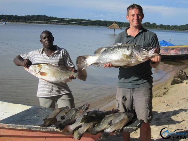 曾经是泛滥成灾的入侵鱼种,结果惨被吃成依靠政府保护的鱼种-20.jpg