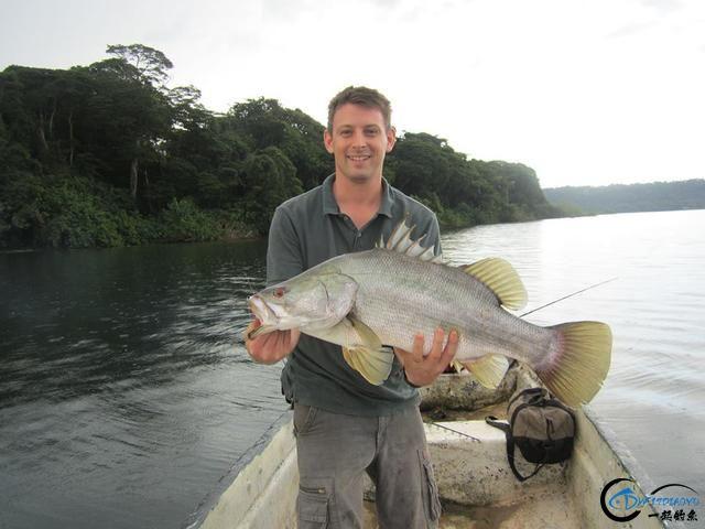 曾经是泛滥成灾的入侵鱼种,结果惨被吃成依靠政府保护的鱼种-24.jpg