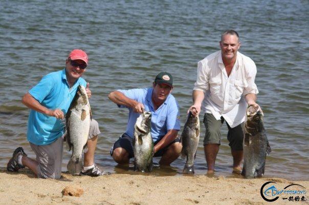 曾经是泛滥成灾的入侵鱼种,结果惨被吃成依靠政府保护的鱼种-23.jpg