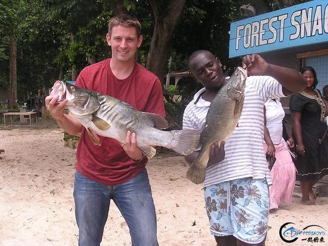 曾经是泛滥成灾的入侵鱼种,结果惨被吃成依靠政府保护的鱼种-21.jpg