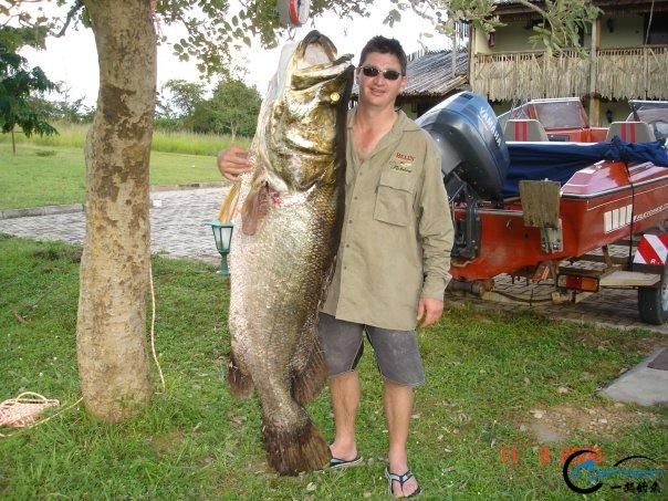 曾经是泛滥成灾的入侵鱼种,结果惨被吃成依靠政府保护的鱼种-17.jpg