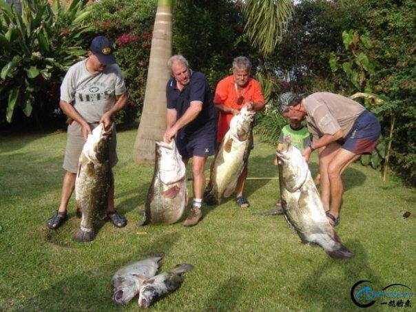 曾经是泛滥成灾的入侵鱼种,结果惨被吃成依靠政府保护的鱼种-26.jpg