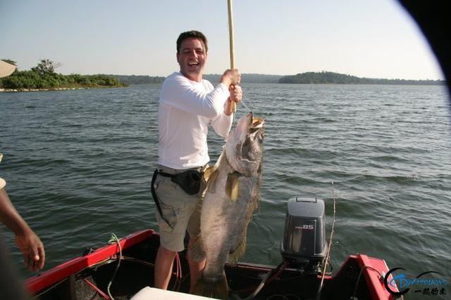 曾经是泛滥成灾的入侵鱼种,结果惨被吃成依靠政府保护的鱼种-35.jpg
